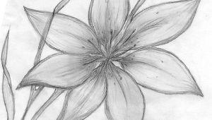 Easy Drawings Of Flowers In Pencil Step by Step Credit Spreads In 2019 Drawings Pinterest Pencil Drawings