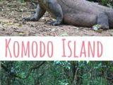 Easy Drawings Of Komodo Dragons 110 Best Komodo Dragon Images In 2019 Lizards Reptiles