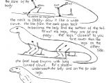 Easy Drawings Of Komodo Dragons 13 Best Noah School Images On Pinterest Fair Projects Animal
