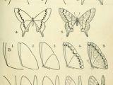 Easy Drawings Robin Pin by Robin Dill On Art Projects Pinterest Ca Mo Dibujar Arte