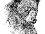 Easy Drawings with Value Animals Drawn In Pen Creativity In 2019 Pinterest Drawings