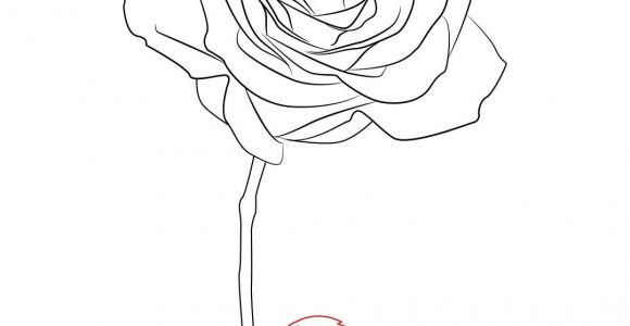 Easy How to Draw A Rose Step by Step How to Draw A Rose Simple Step by Step Rose Drawing Simple