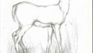 Easy Jason Drawings Pencil Easy Animal Sketch Drawing Drawing Drawings Pencil