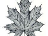 Easy Maple Leaf Drawing Die 8 Besten Bilder Von Kanada Tattoo Kanada Tattoo