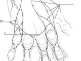 Easy Skeleton Hand Drawing Drawing Hand andrew Loomis Other Ideas How to Draw Hands