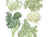 Easy to Draw Vegetables Cauliflower Vegetable Illustration Vegetable Drawing