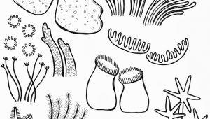 Easy Underwater Drawings Drawing Underwater Coral Reef Coral Reef Pinterest Coral Reef