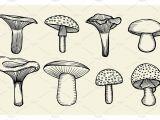 Easy Vintage Drawings Hand Drawn Vintage Mushrooms by Vector Videoartshop On