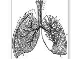 Easy Vintage Drawings Retro Vintage Kitsch Anatomy Medical Lungs Postcard In 2019