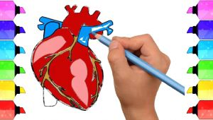 Easy Way to Draw Human Heart Diagram Class 10 How to Draw Human Heart Anatomy Color Drawing for Kids How