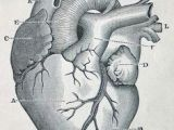 Even Chance Of Drawing A Heart 45 Best Heart Anatomy Images Heart Anatomy Cardiology Nurses
