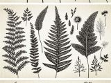 Fern Drawing Easy Botanical Element Illustrations Idea Try Printing to