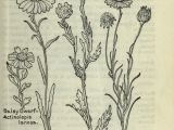 Field Of Yellow Flowers Drawing 1915 Field Book Of Western Wild Flowers Biodiversity Heritage