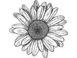 Flower Drawing Tumblr Transparent 102 Best Random Pics Tumblr Transparents Etc Images Drawings