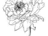 Flowers Drawing Come 1412 Nejlepa A Ch Obrazka Z Nasta Nky Flower Drawings Drawings