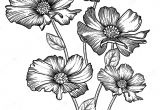 Flowers Drawing Decoration Blooming forest Flowers Detailed Hand Drawn Vector Illustration