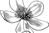 Flowers Drawing Decoration Flower Clipart A Liked On Polyvore Featuring Backgrounds Flowers