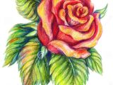 Flowers Drawing Easy with Color 25 Beautiful Rose Drawings and Paintings for Your Inspiration