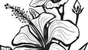 Flowers Drawing Graphic 1412 Nejlepa A Ch Obrazka Z Nasta Nky Flower Drawings Drawings