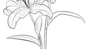 Flowers Drawing Guide 87 Best How to Draw Flowers Plants Images Drawing Flowers