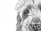 Goldendoodle Drawing Easy Goldendoodle Art Dog Art Golden Doodle Art Labradoodle