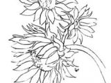 Graphite Drawing Flowers 1724 Best Pencil Drawings Images Drawing Techniques Pencil