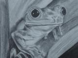 Graphite Pencil Drawing Ideas Tree Frog Pics In 2019 Pencil Drawings Drawings