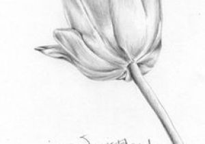 Graphite Pencil Drawings Of Flowers 1412 Nejlepa A Ch Obrazka Z Nasta Nky Flower Drawings Drawings