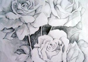Graphite Pencil Drawings Of Flowers Flower Drawings Thanks to Graphite Pencil Drawings by Suzanne