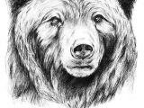 Grizzly Bear Drawing Easy Grizzly Bar Zeichnung Bar Tattoos Baren Tattoo