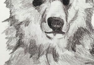 Grizzly Bear Drawing Easy Grizzly Bear Drawing Sketch Baby Footprint Kit