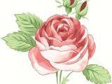 Hand Drawing Rose Flowers Bellas Ilustraciones Cvijea E Od Fondana In 2018 Pinterest
