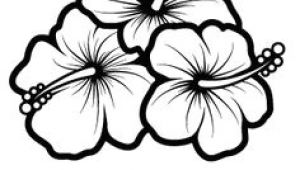 Hawaiian Flowers Drawing Easy 11 Best Hibiscus Drawing Images In 2019 Hibiscus Drawing Hibiscus