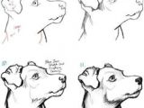 How to Draw A Pitbull Face Easy Step by Step 17 Best Dog Drawing Simple Images Dog Drawing Simple