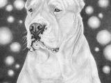How to Draw A Staffy Dog Easy My Argentine Dog Drawing Nacho Draw