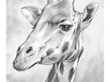 How to Draw Animal Faces the Giraffe Animal Drawings Giraffe Drawing Animal Sketches