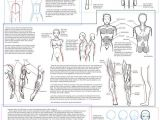 Human Anatomy Easy Drawing A Nice Overview Of Human Anatomy for Those Of Us who