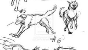 Images Of A Drawing Of A Wolf 61 Best Wolf Images Wolves Drawing Ideas Drawings