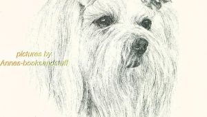Ink Drawing Dogs 44 Maltese Dog Art Print Pen and Ink Drawing Jan Jellins Ebay