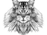 Ink Drawing Of A Cat Cat Breed Maine Coon Face Sketch Vector Black and White Drawing