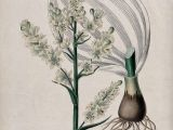 Is Drawing Flowers Haram Collections Search Creators W C Edwards Wellcome Collection