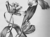 Jar Of Flowers Drawing Pencil Sketches Of Flower Vase Drawn Vase Pencil Sketch 1h Vases