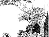 Jungle Drawing Easy Pin On Ink