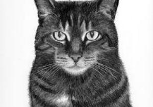 Kitten Drawing Tumblr 112 Best Kitten Drawings Images Cats Dog Cat Watercolor Cat