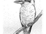 Kookaburra Drawing Easy Pin by Cheryl Cannon On Zentangles Bird Drawings Ink Pen