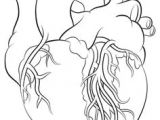 Line Drawing Of A Love Heart Human Heart Tattoo by Metacharis On Deviantart Always A Parents
