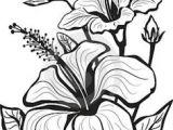 Line Drawing Of Hibiscus Flowers 1412 Nejlepa A Ch Obrazka Z Nasta Nky Flower Drawings Drawings