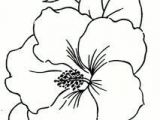 Line Drawing Of Hibiscus Flowers 248 Best Hibiscus Images Flower Designs Painting Flowers Pyrography
