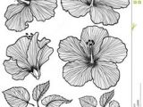 Line Drawing Of Hibiscus Flowers 28 Best Line Drawings Of Flowers Images Flower Designs Drawing