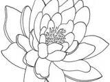 Line Drawing Of Lotus Flower 34 Best Lotus Flower Tattoo Outline Images Lotus Tattoo Lotus